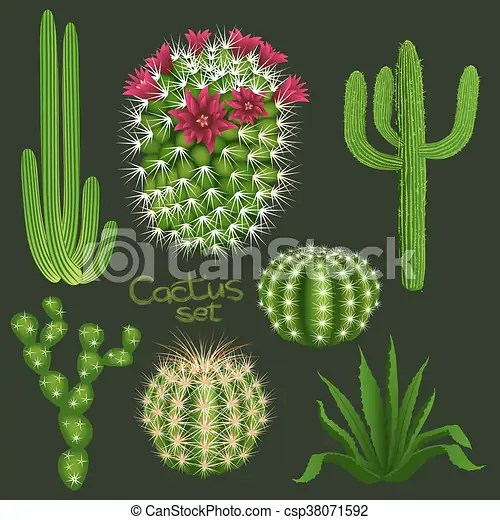 different cactus types realistic