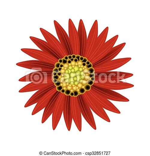 elegant perfect red sunflower