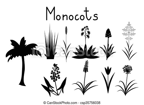 Examples of monocots plants collection.