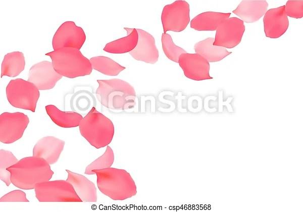 falling rose petals bright
