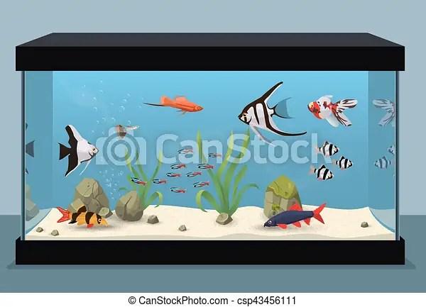 Freshwater aquarium illustration containing different