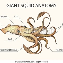 Labeled Diagram Of Octopus 2005 Nissan Pathfinder Trailer Wiring Giant Squid Block Anatomy Illustration Colorful Dissection