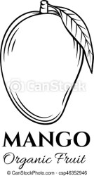 Hand drawn mango icon vector badge fruit in the old ink style for brochures banner restaurant menu and market CanStock