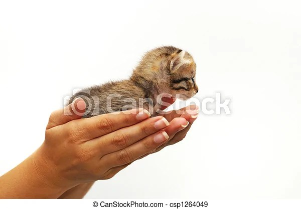 hands cupping small kitten