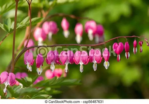 heart shaped flowers in