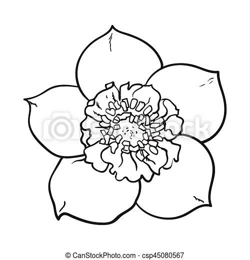 Hellebore, christmas rose single flower, top view, sketch