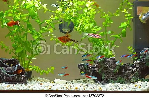 home aquarium with fishes