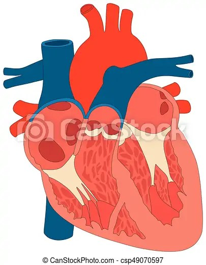 heart diagram inside simple human eye muscle structure anatomy infographic chart csp49070597
