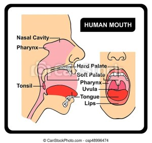Human mouth anatomy diagram including all parts for