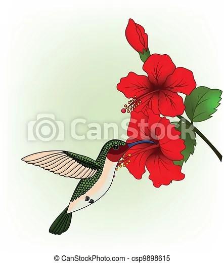 vector illustration of hummingbird