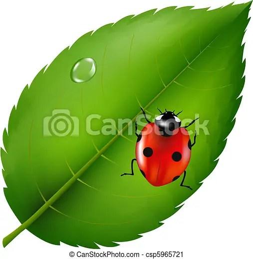 ladybird leaf. ladybug leaf