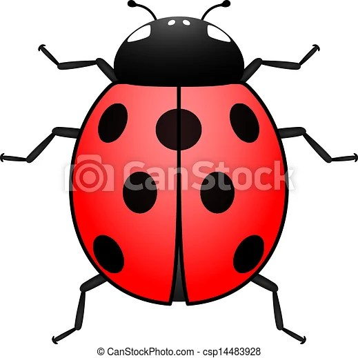 ladybug illustration. top view