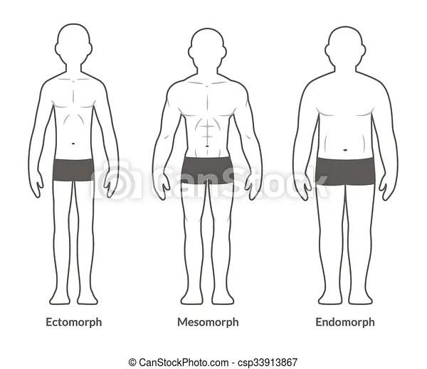 Male body type chart. Male body types: ectomorph