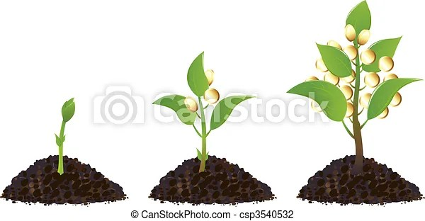 Money plants life process. Life process of money tree with golden coins, isolated on white.