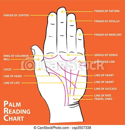 palmistry diagram marriage line 1980 cb750 wiring map of the palm s main lines vector illustration csp3507338