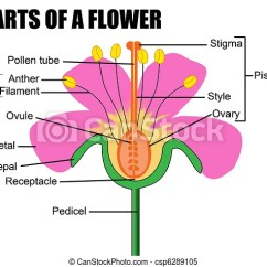 Parts Of A Flower Diagram Pioneer Super Tuner 3d Wiring Vector Illustration Useful Csp6289105