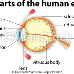 Human Eye Parts Diagram Ryobi Pressure Washer Of With Name Illustration Csp38229882
