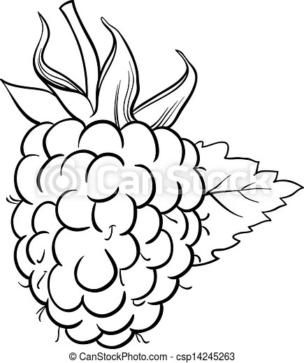 Raspberry illustration for coloring book. Black and white