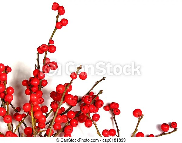 red christmas berries on