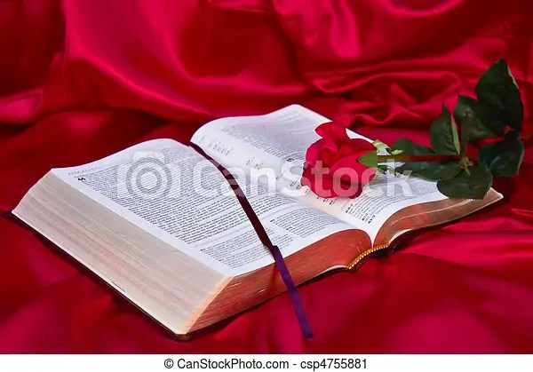 Red rose on bible Red silk background with red rose across bible