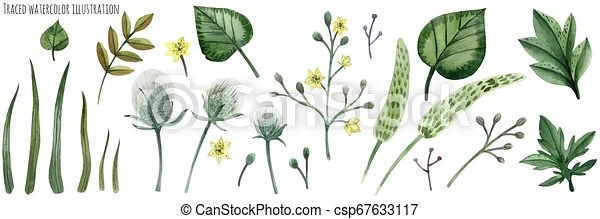 Hand drawn woodland trees, herbs, mushrooms, flowers, branches, berries, leaves. Traced Vector Set Of Forest Plants Canstock