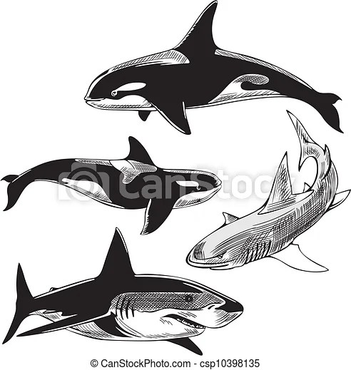 Sharks and killer whales. Sharks and killer whales. set of