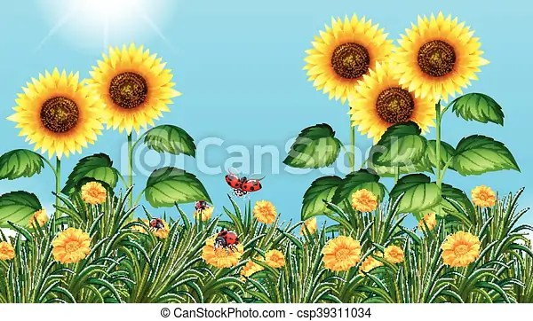 sunflower field with ladybugs flying