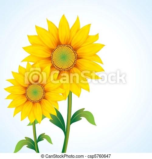 sunflower. illustration of pair