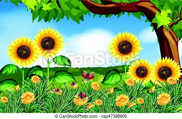 sunflowers and ladybugs in garden