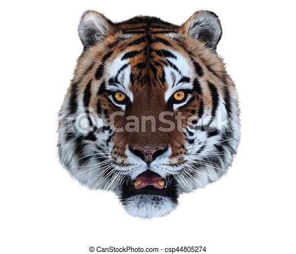 tiger s face with