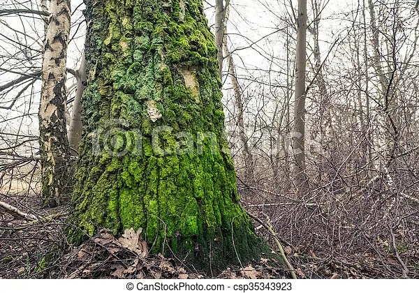 tree with green moss