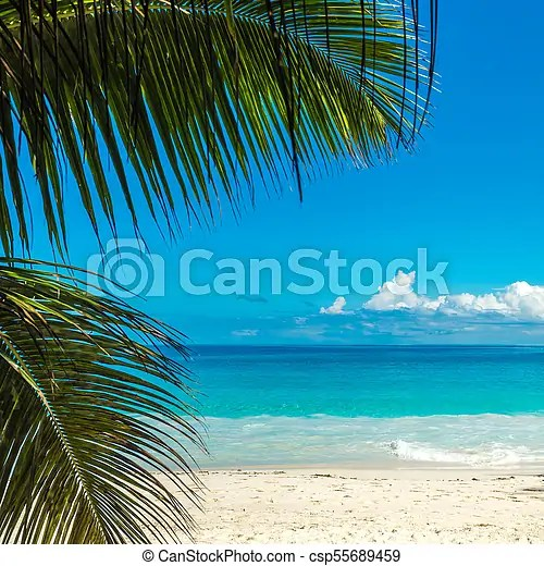 Tropical Island Beach Perfect Vacation Background