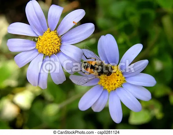 two blue flowers and