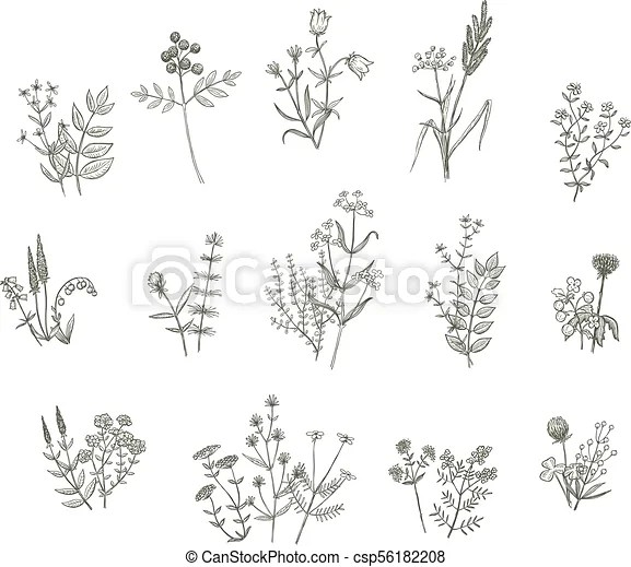 vector flowers drawing set