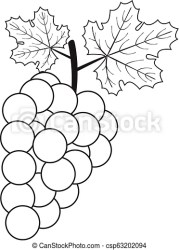 Vector outline grape Vector illustration of outline grape with leaves