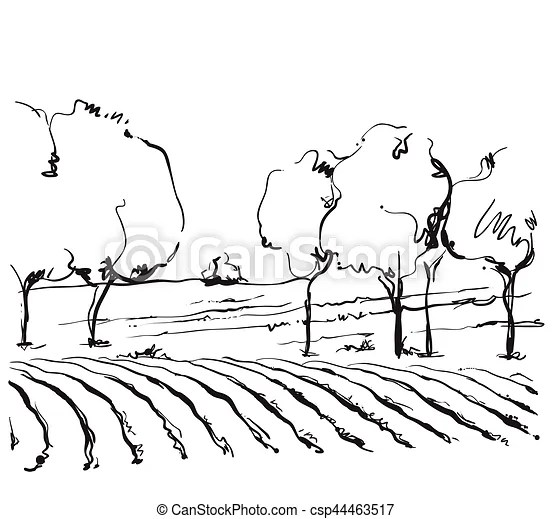 Vineyard landscape vector sketch design. hand drawn