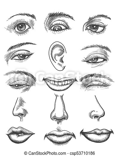 Vintage sketch human face parts. Engraving lips and ear