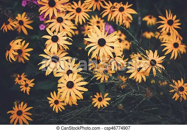 yellow flowers with dark
