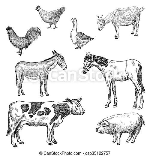 Bauernhoftiere. Skizzen, bauernhof, satz, vektor, animals.