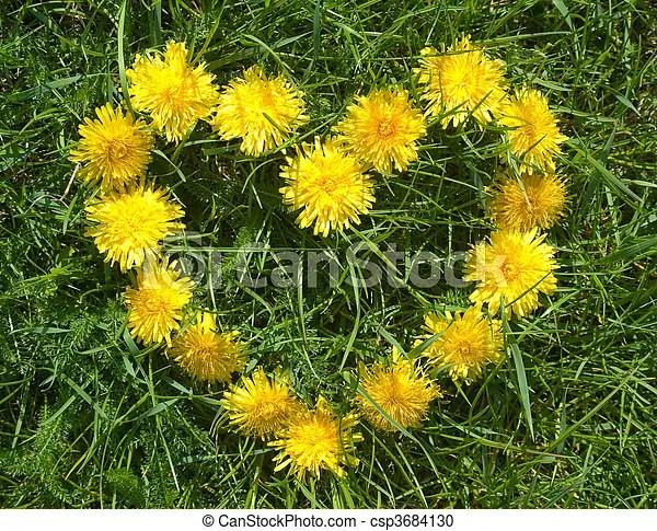 Stock Fotografie von Blumen herz  herz gemacht von gelber Lwenzahn auf csp3684130