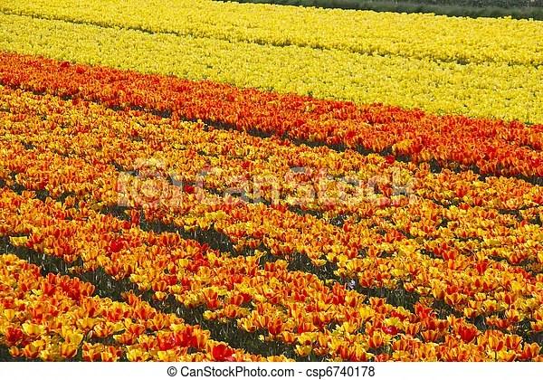 Bilder von felder blume netherlands  Fields mit