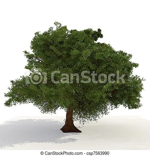 chene sur arbre fond blanc 3d