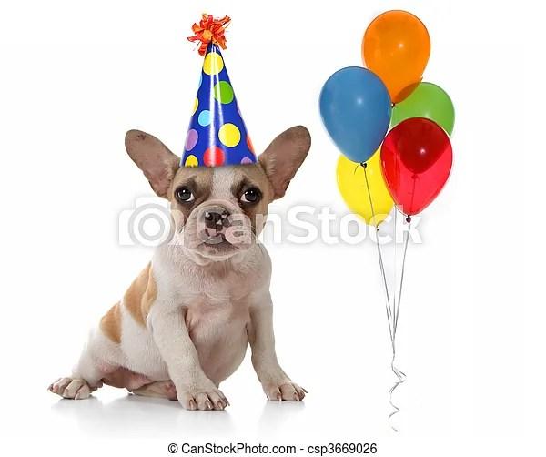 Fte chapeau anniversaire chien ballons Chiot coup