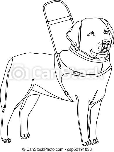 Labrador, chien, guide, retriever, contour. Contour, chien
