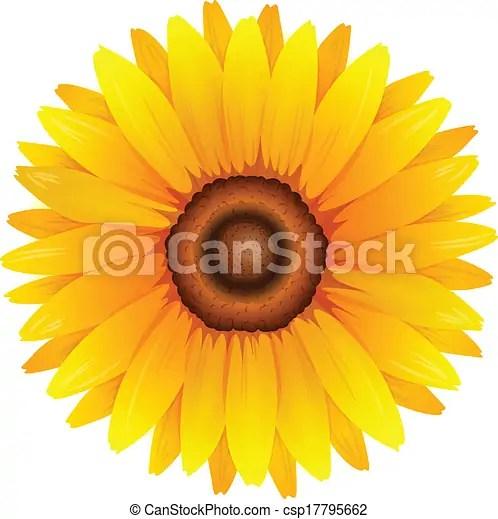 顯示. 插圖. 向日葵.