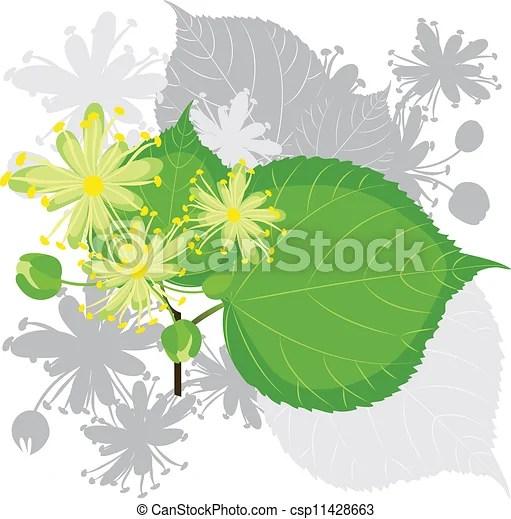 菩提樹, 花, 葉子, 樹, 開花.