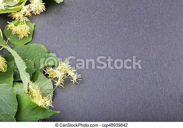 菩提樹, 開花, 分支. 菩提樹, 開花, 正文, 板巖, 在那裡, 地方, 分支, board.   CanStock