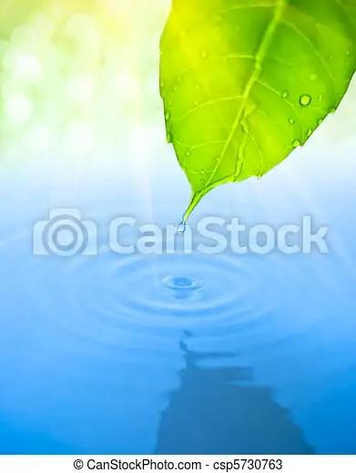 葉子. 下降. 水. 綠色. 秋天. 波紋.