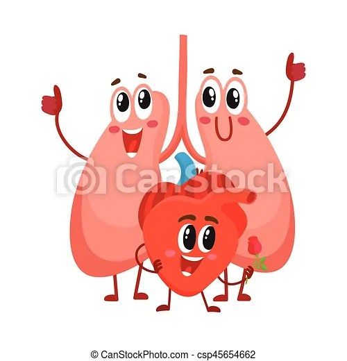 Funny smiling human lungs and heart characters chest