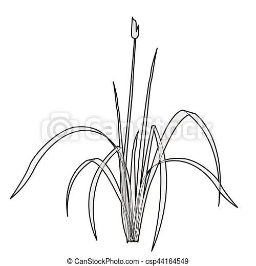 Geschetste, vrijstaand, water, vector, reed., plant